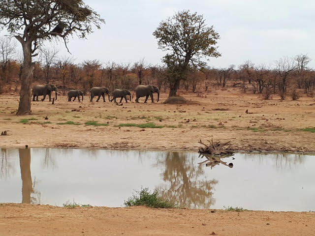 A herd of elephants at Kruger National Park