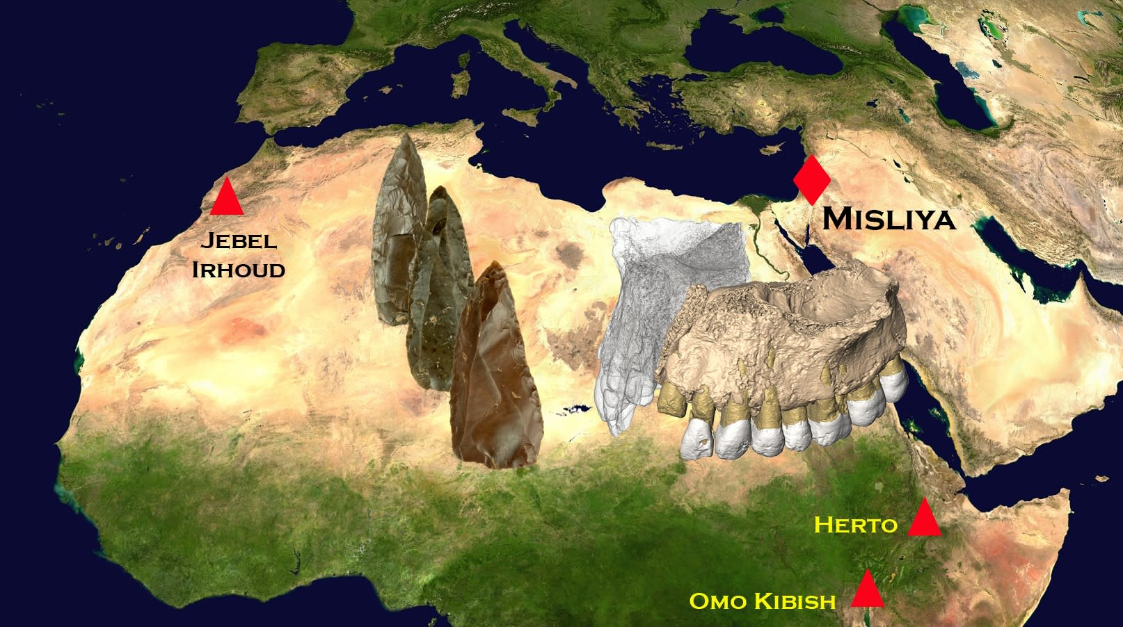 The location of early modern human fossils in Africa and the Middle East. (COURTESY OF ROLF QUAM / BINGHAMTON UNIVERSITY)