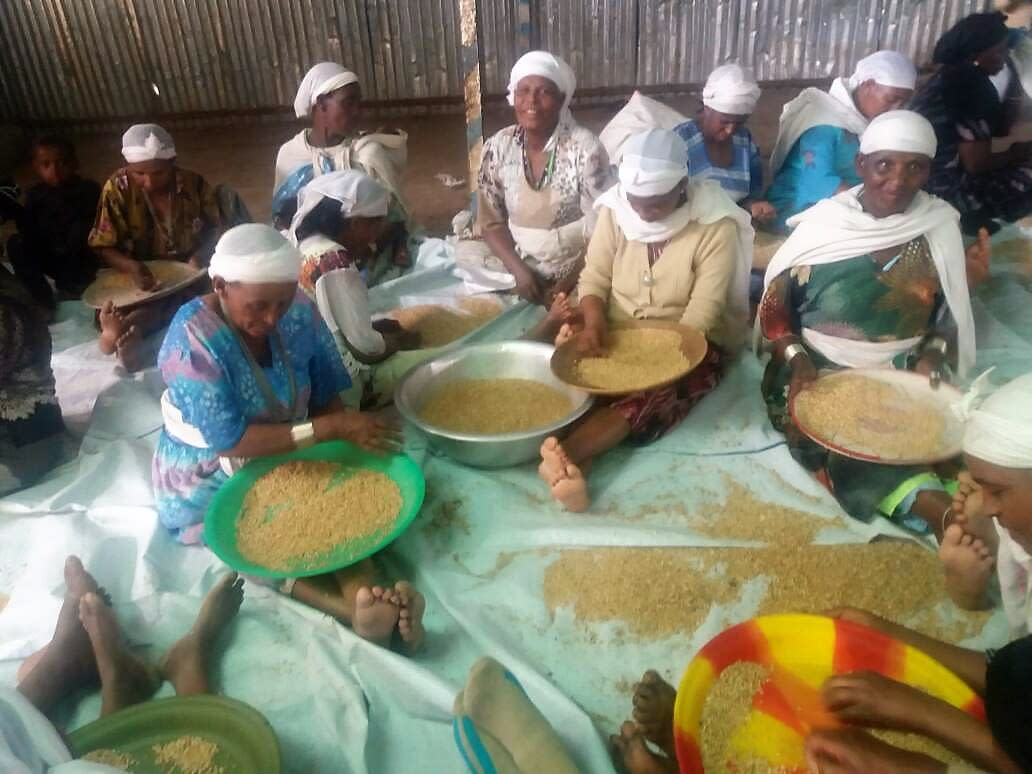 Ethiopian Jewis prepare for Passover (STRUGGLE FOR ETHIOPIAN ALIYAH/PASSOVER).