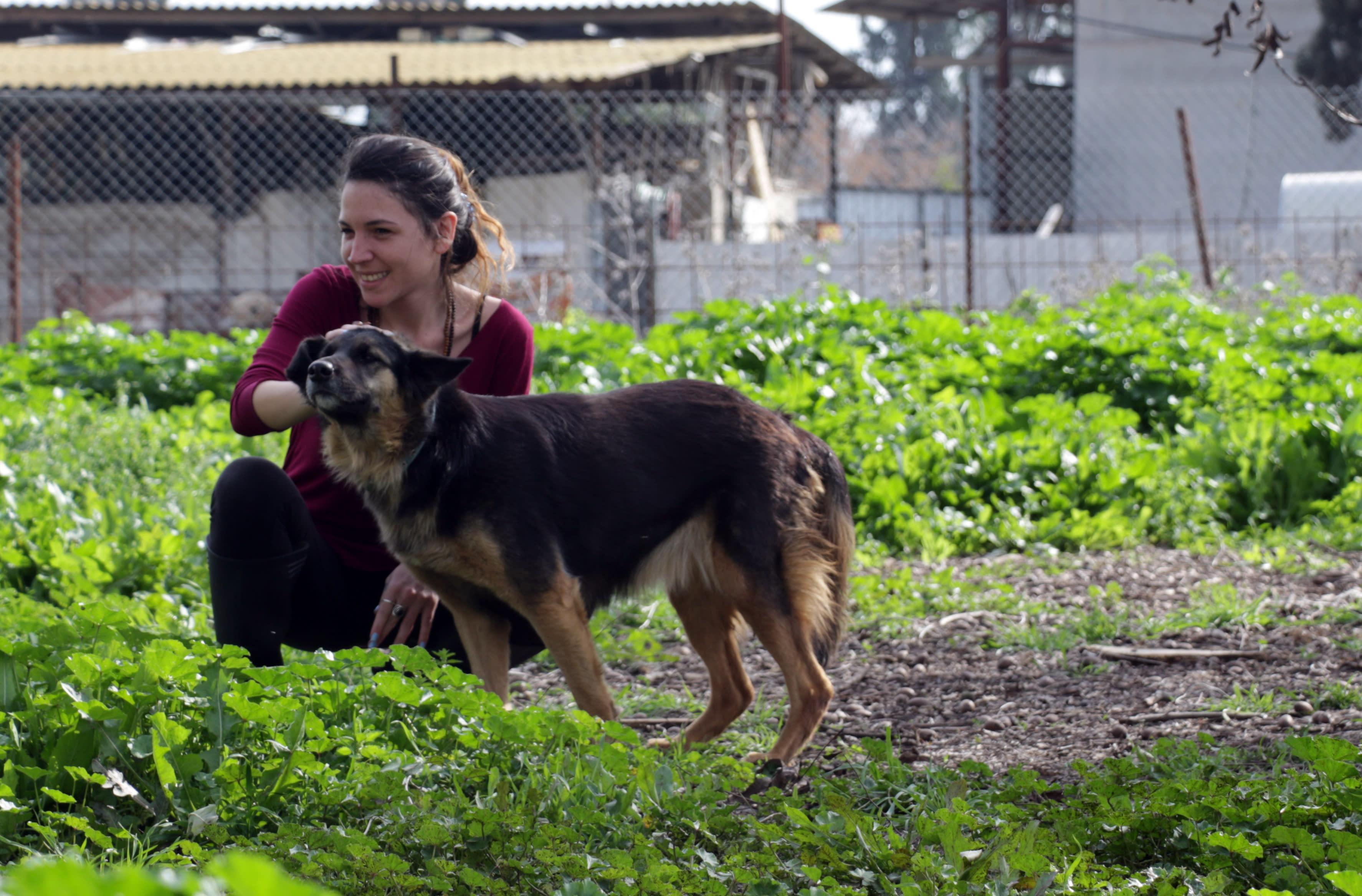 Volunteer Hagar Meirson treats Lily a dog with a