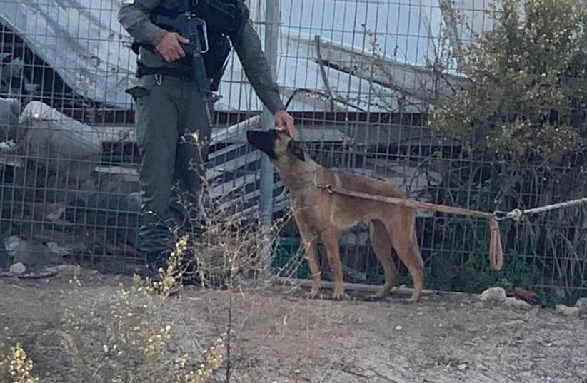 Border patrol soldiers find and rescue dogs in Jerusalem - Israel News - Jerusalem Post