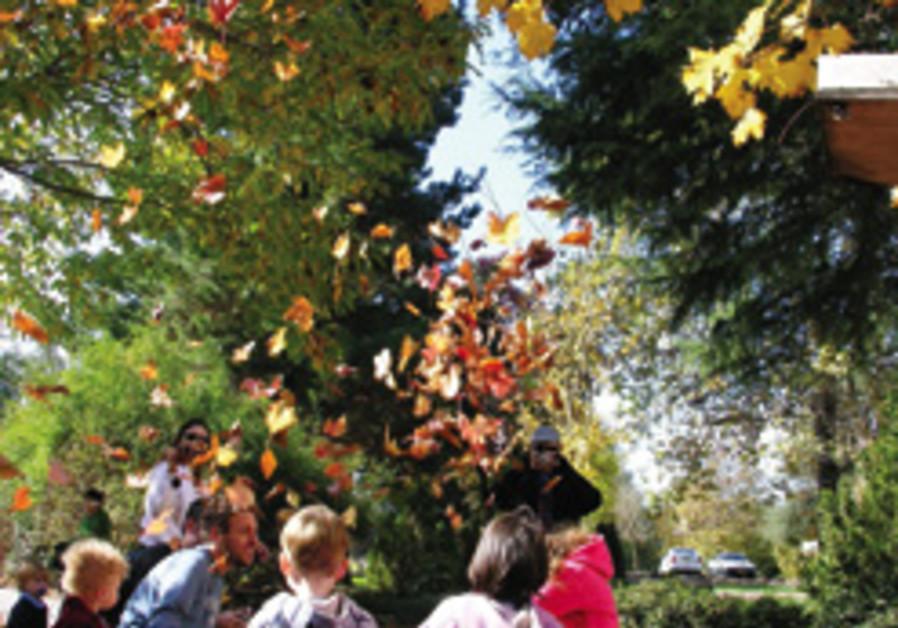 fall in metulla 248.88