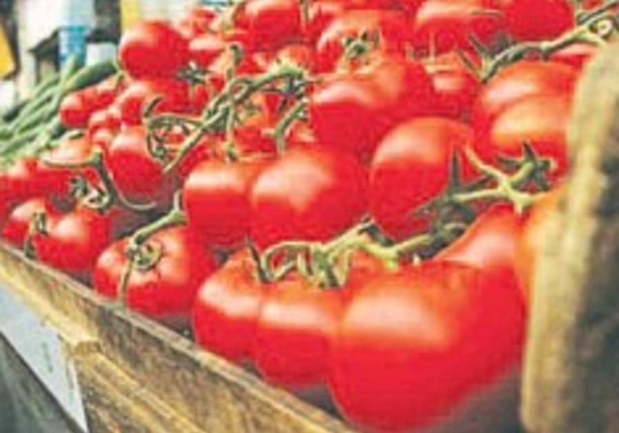 tomatoes 248.88