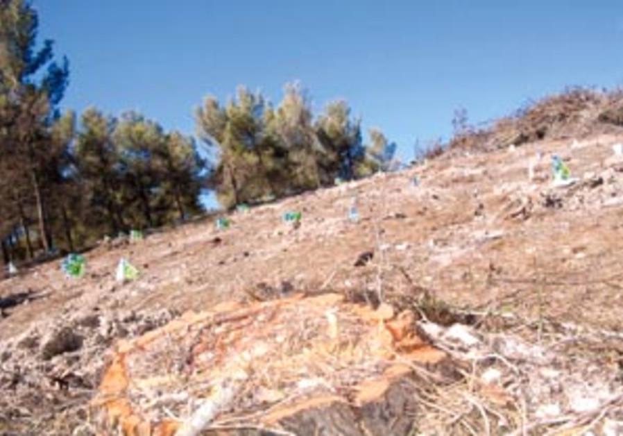 new saplings 88 298