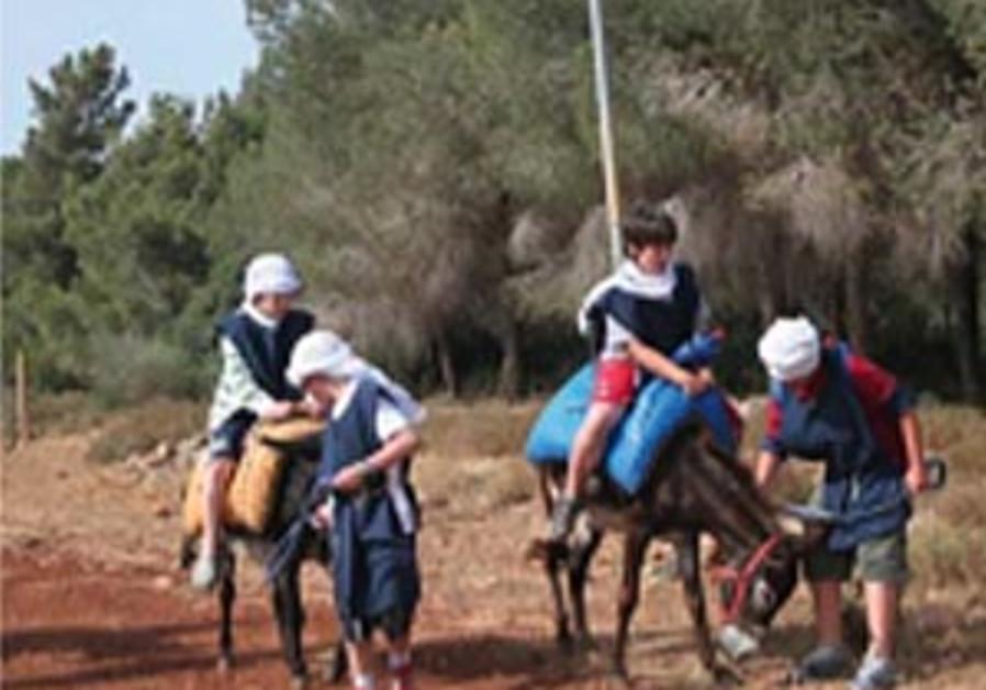 Donkey trip