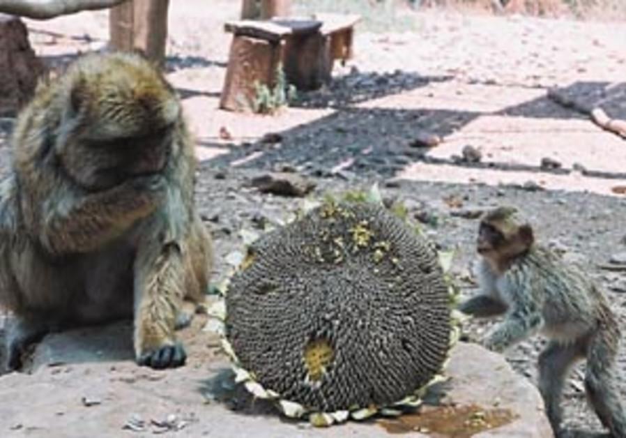 monkey park 88 298
