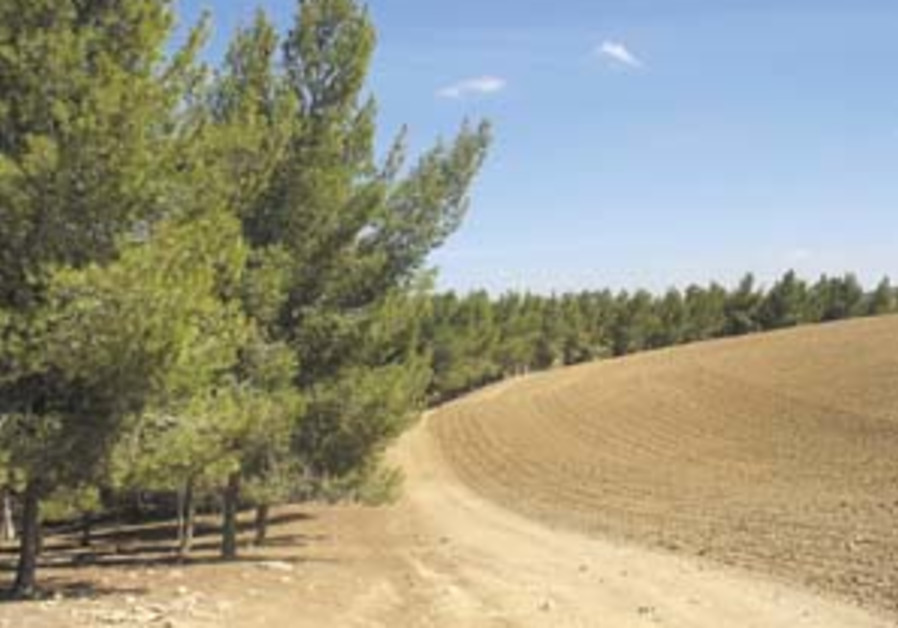 Forest encore to Meitar