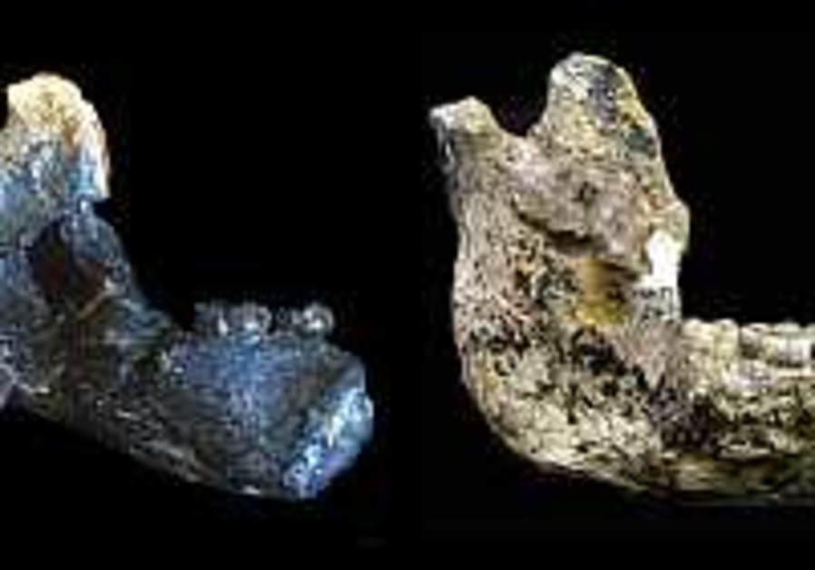 Israeli researchers: 'Lucy' is not direct ancestor of humans