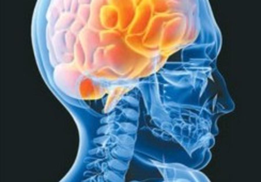 human brain mind 248.88