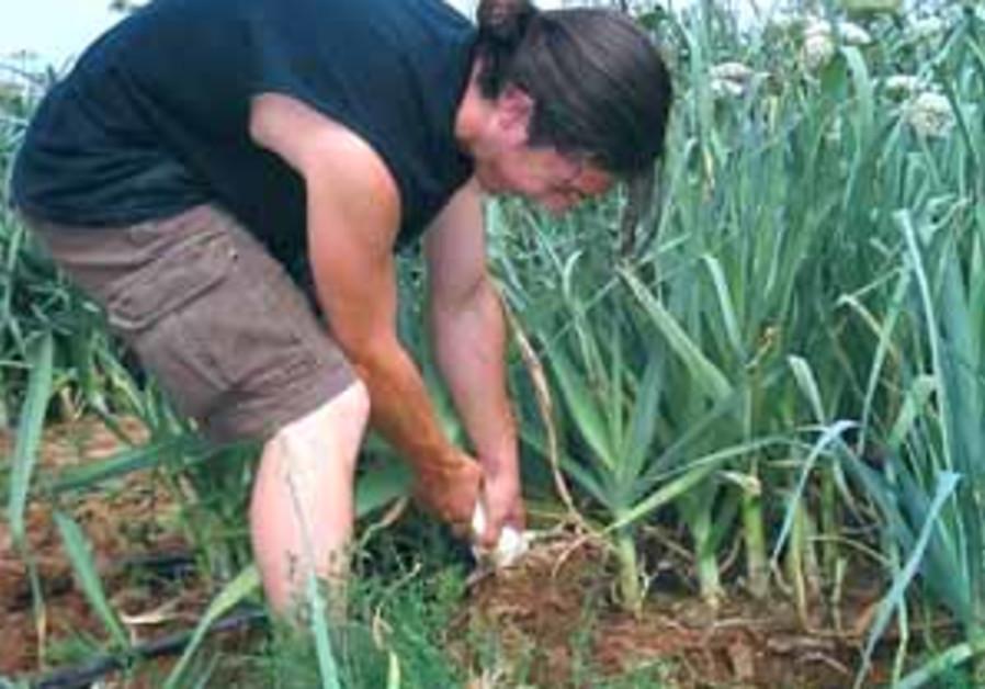 gardening batzal 88 298