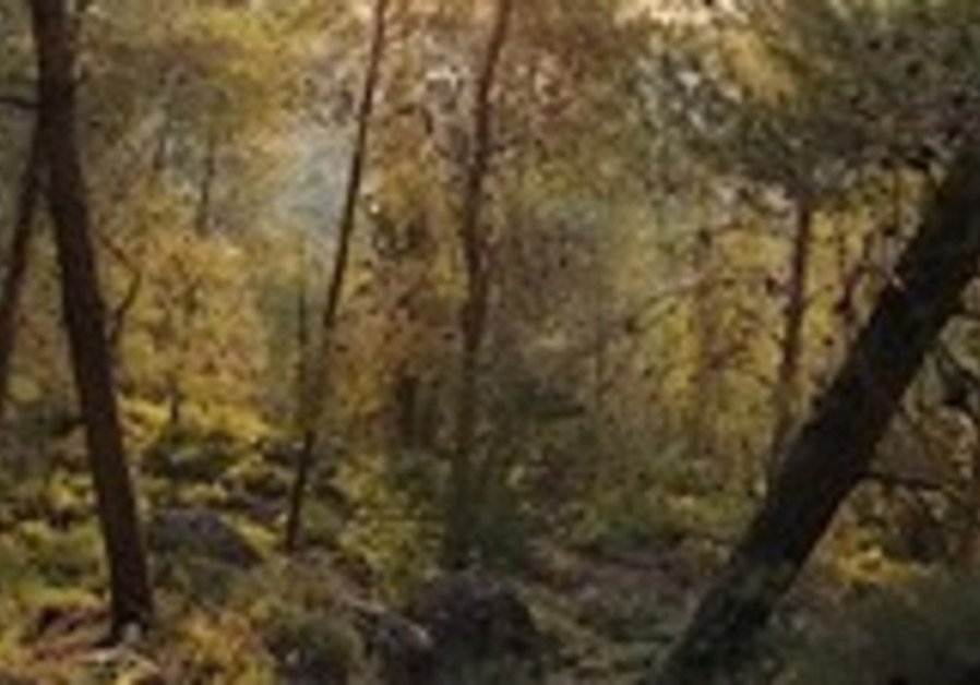Israeli forest (illustrative).
