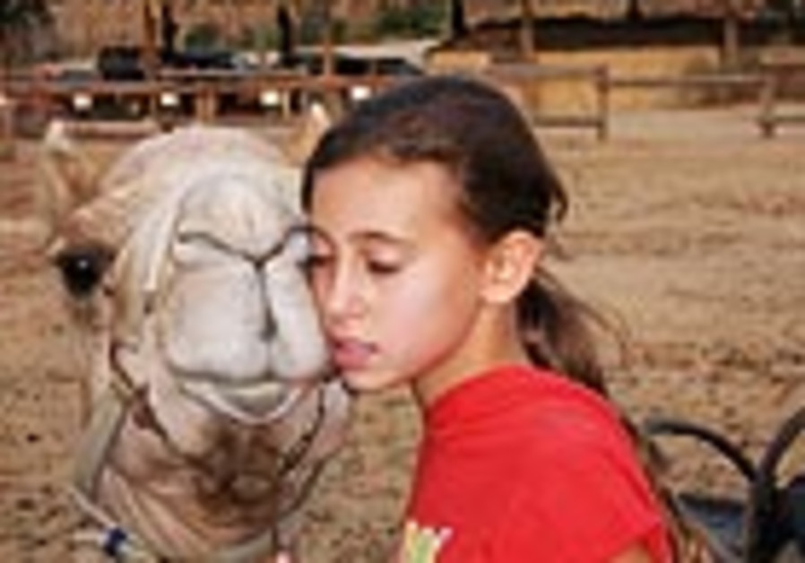 The Negev Camel Ranch