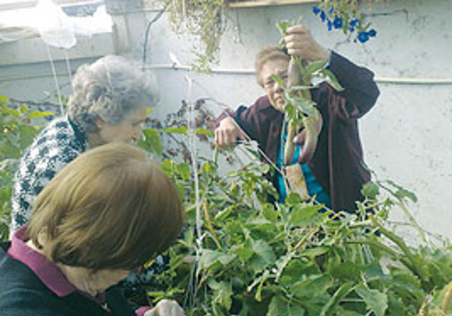 The Neveh Amit organic garden