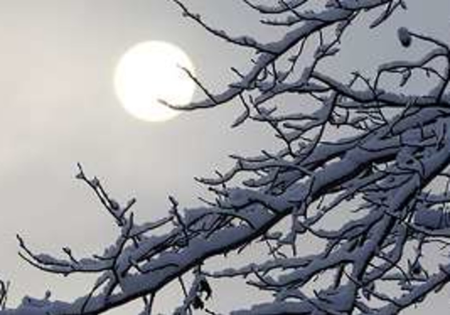 Sun rising over trees with snow on its branches