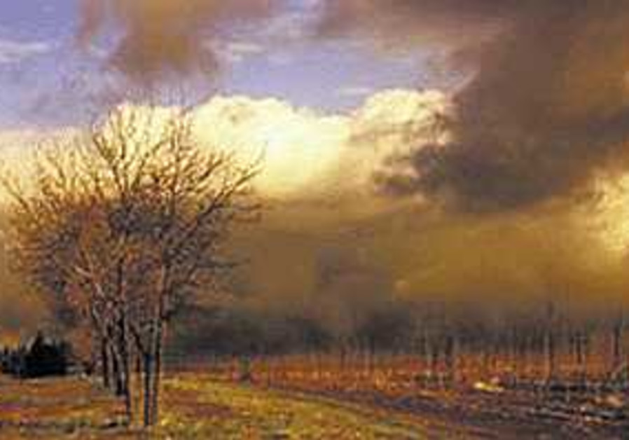 Visions from the vineyard