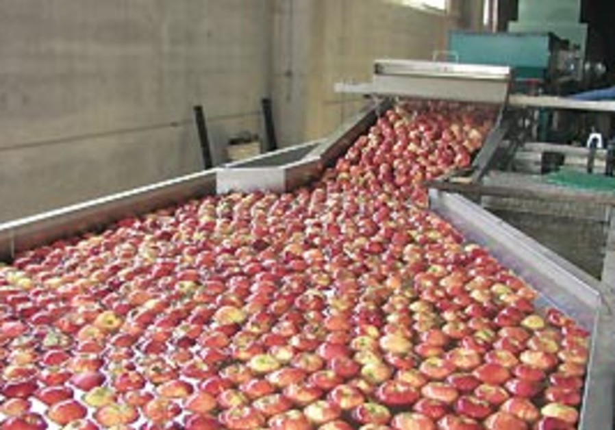 This year some 10,000 tons of apples grown by Drus