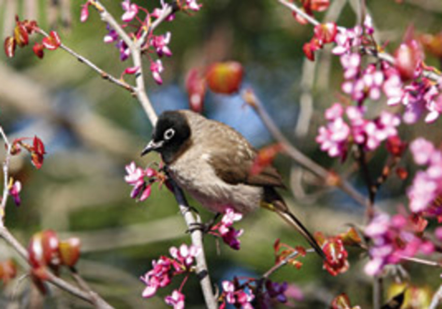 Birds, blossoms - and a whole lot more.
