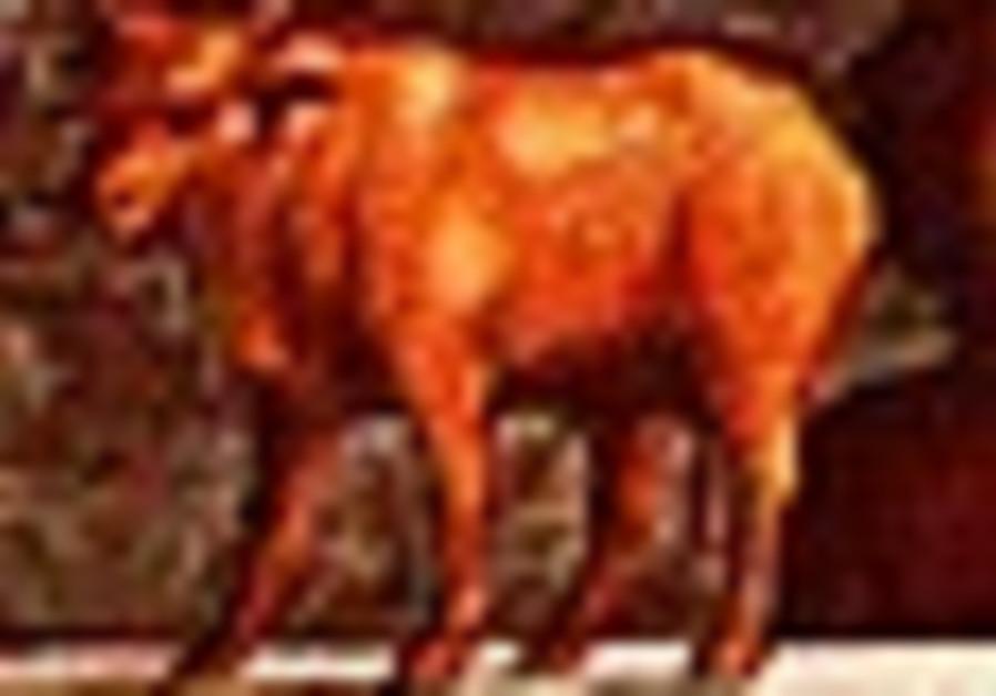 Golden Calf.