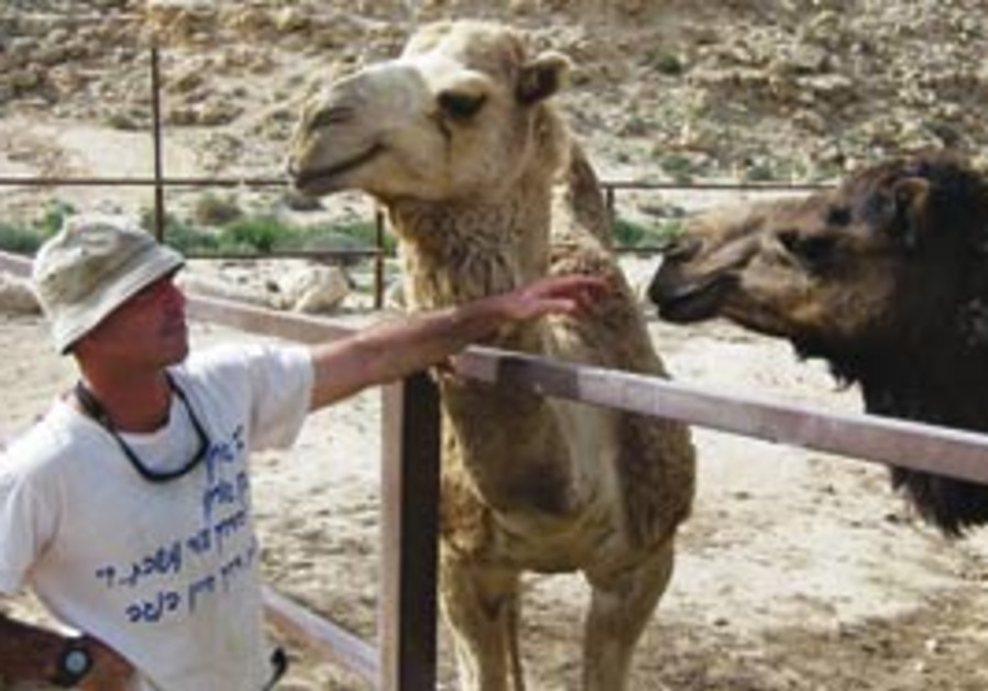 YONI SHARIR chats with Hammerhead (left) and his p