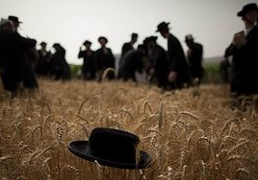Haredi men harvest wheat ahead of the Jewish Shavu