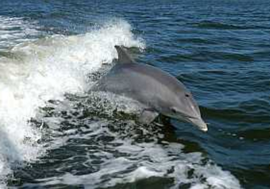 Hizbullah rockets disturbed dolphins, whales too
