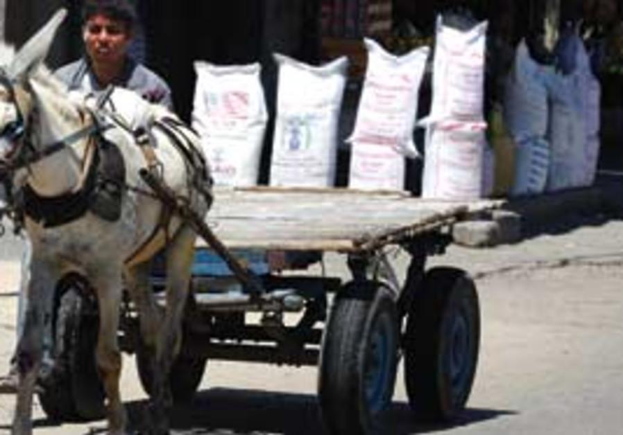 Palestinian boy drives donkey past UN food aid