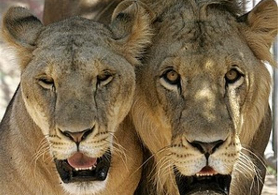 Hamas takes pride in freeing lion