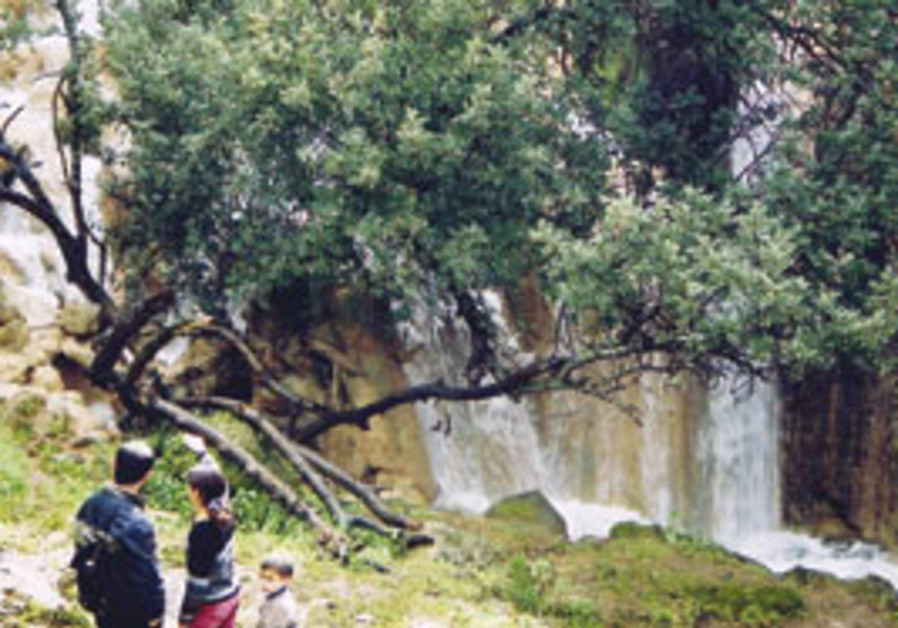 CFE aims to preserve the Galilee's environment thr