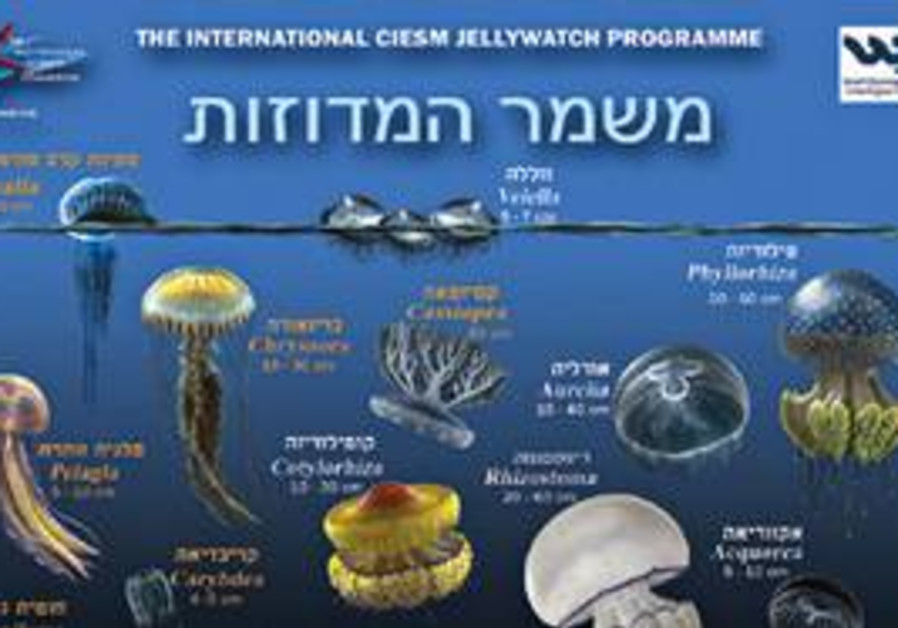 poster warning about jellyfish