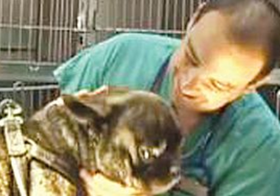 DR. EYTAN KREINER, head veterinarian at Animal Airways and the founder of Terminal4Pets, prepares a