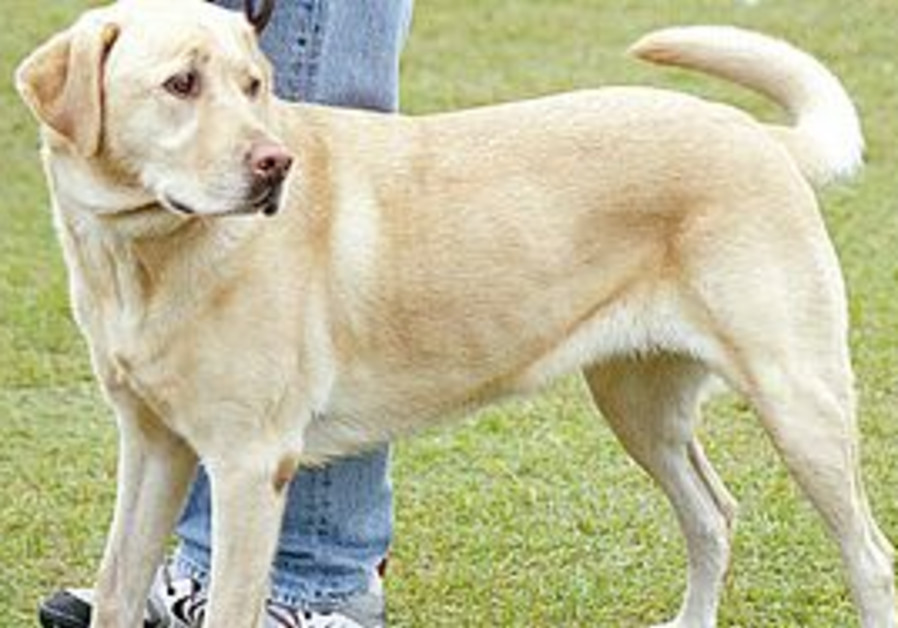 DOGS CAN be carriers of Mediterranean spotted fever, but do not show symptoms of the illness.
