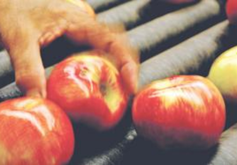 WE MAY not get such great-looking apples to dip in our honey this year, growers say.