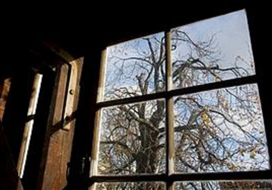 File photo of the tree outside the attic where Anne Frank hid.