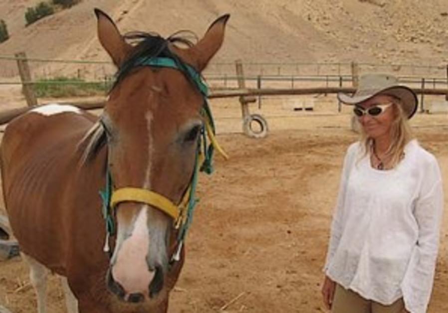 Arava-horse-1-298