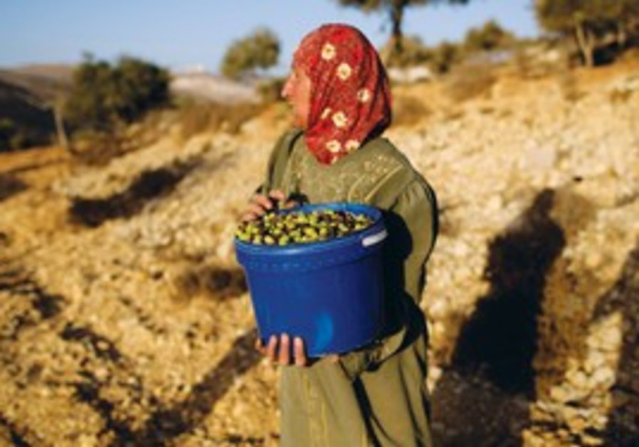 A PALESTINIAN woman carries a bucket of olives she