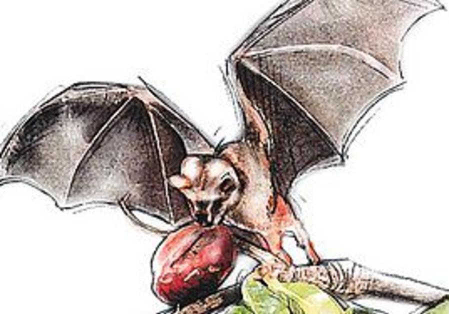 BATS DON'T deserve their bad reputations
