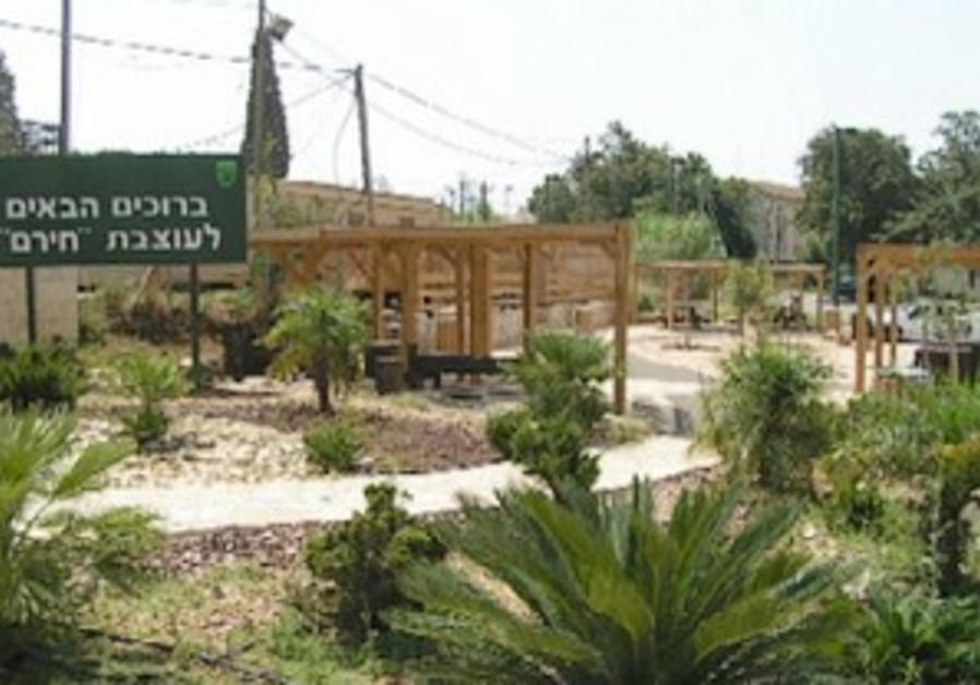 KKL-JNF rehabilitates the North - Cedars of Galilee will grow here