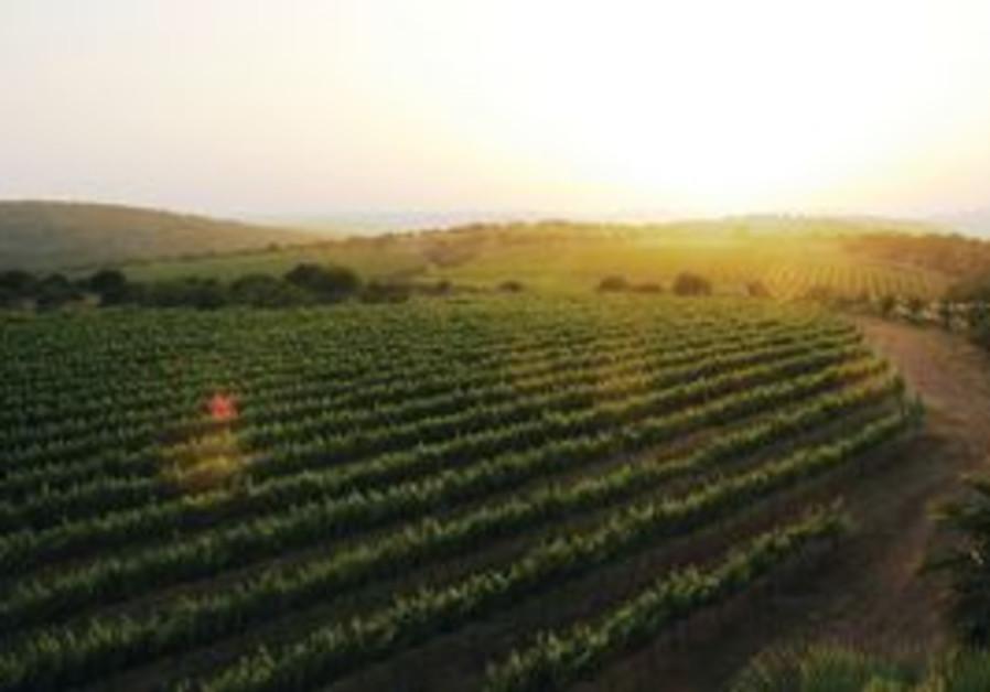 The Ella Valley vineyards
