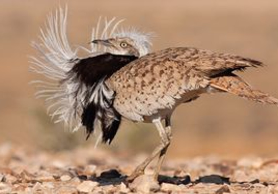 1st annual international ornithological festival.
