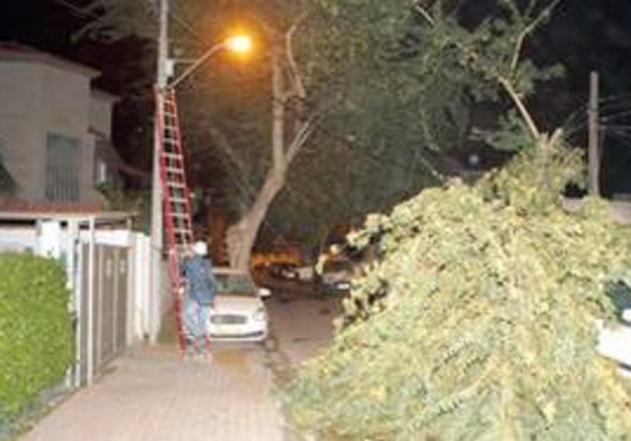 Tree falls on powerline