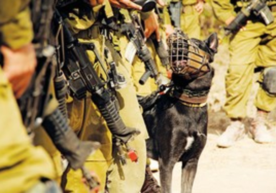 A MUZZLED member of Oketz, the IDF's elite canine