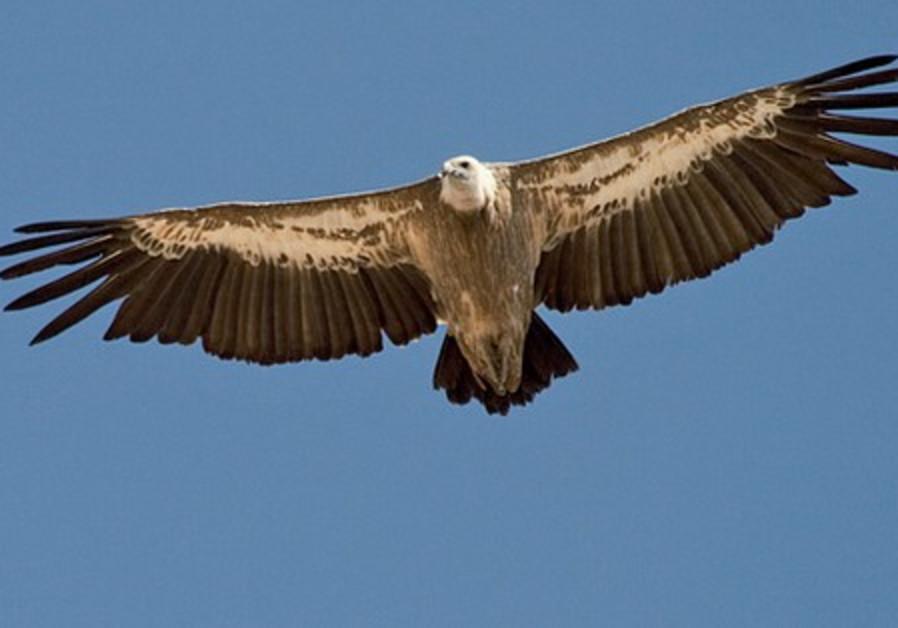 Green Country Auto >> Capture of Israeli 'spy' birds harming wildlife preservation - Middle East - Jerusalem Post