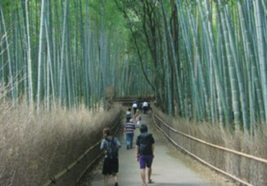 A BAMBOO grove in Kyoto