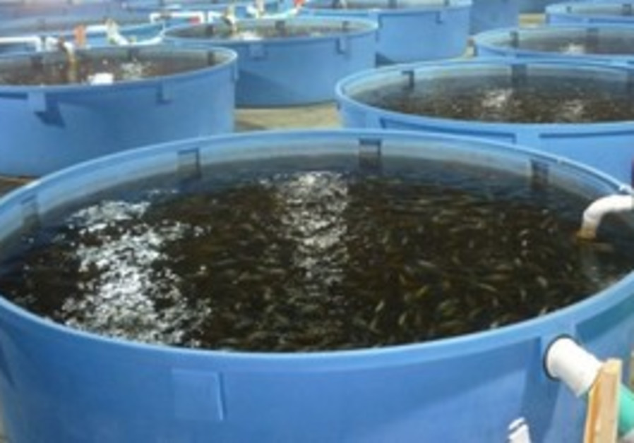 GFA fish factory in the desert