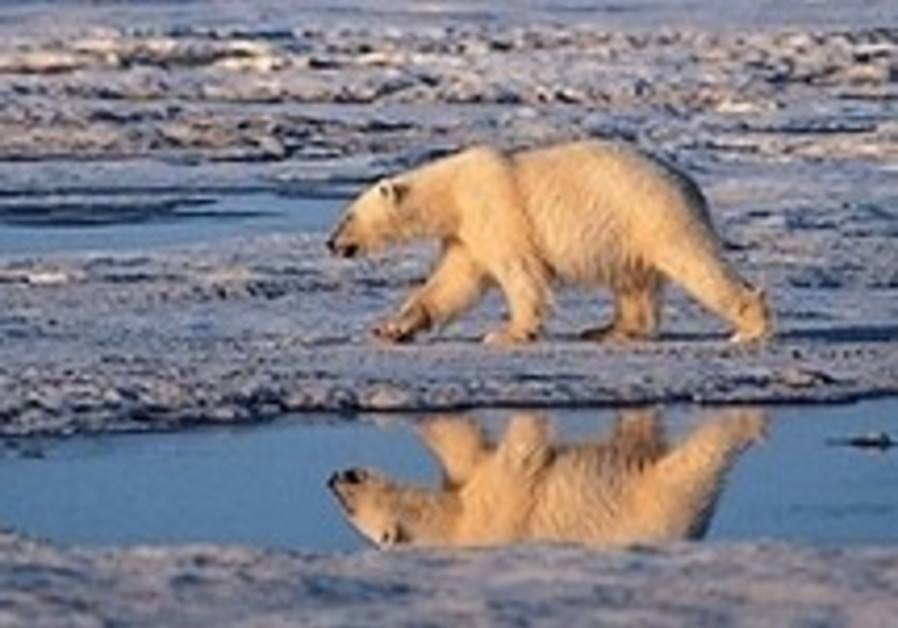 Professor fired after claiming polar bears are thriving in climate change