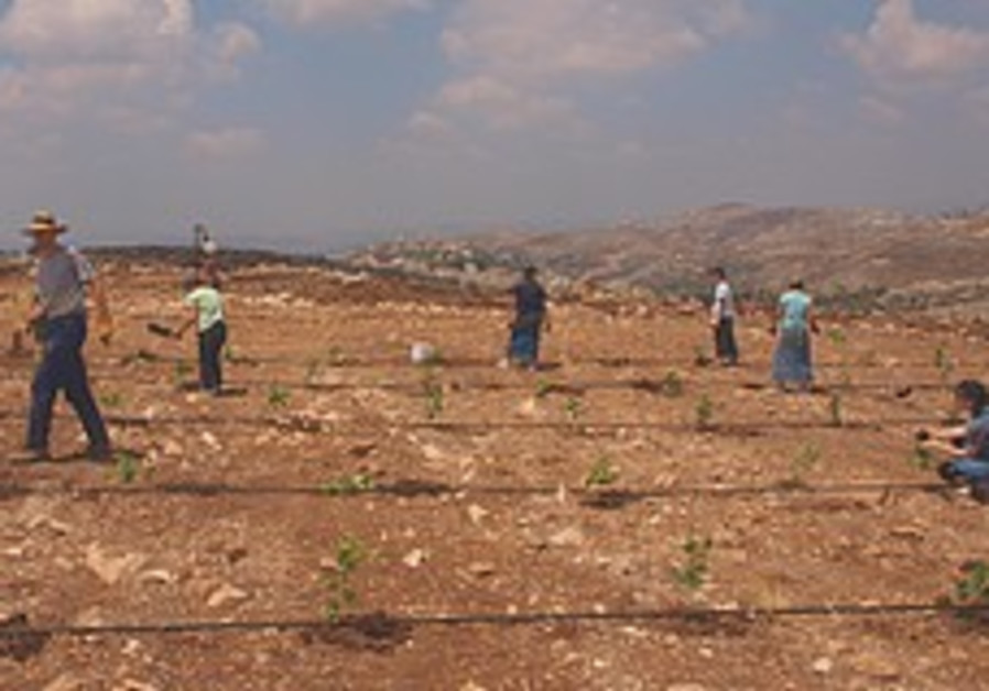 US college students plant a vineyard near Har Brac