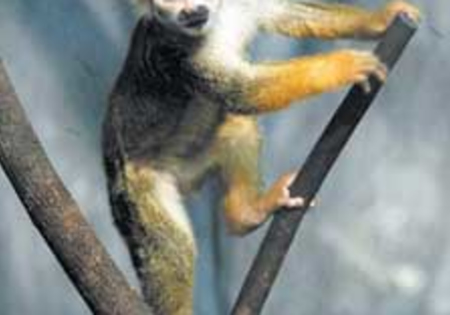 madagascar monkey 88 224