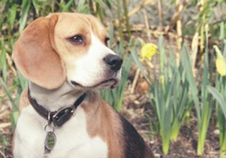 Dog [illustratice photo]