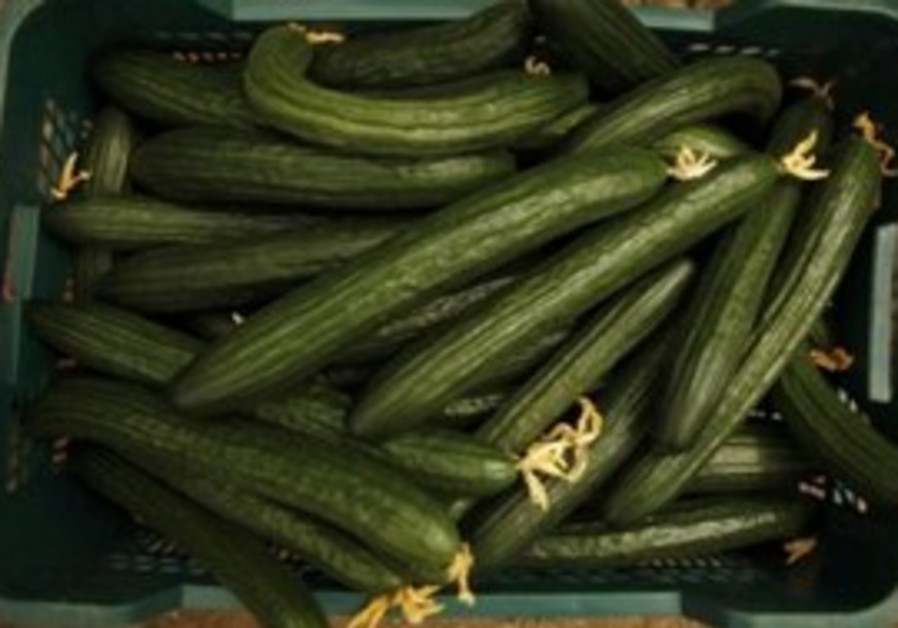 A crate of cucumbers from a Spanish greenhouse.