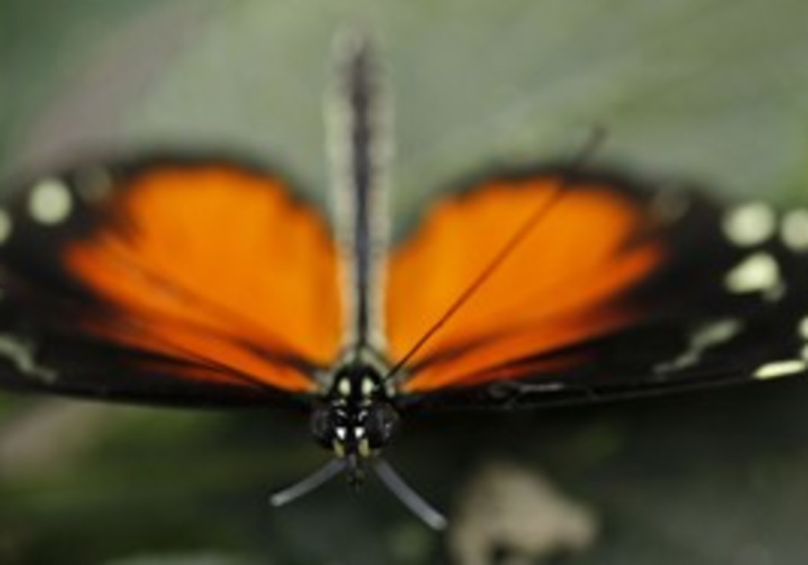 A butterfly rests on a leaf in Costa Rica.